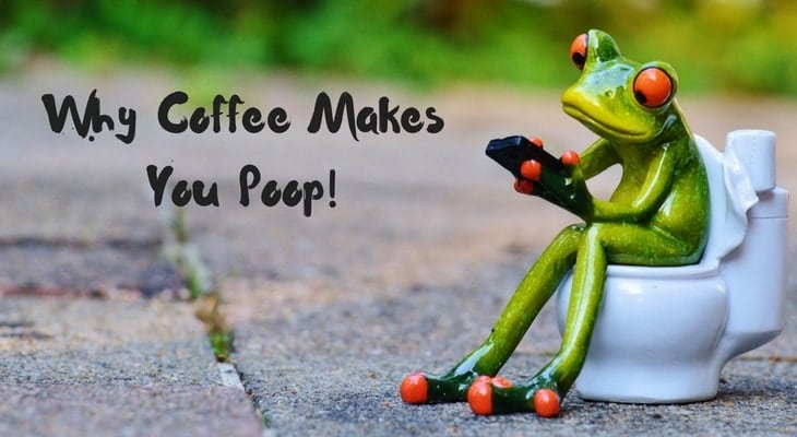 Why Coffee Makes You Poop